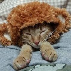 何か腕の位置がおかしいけど 気にせんといてくださいね。  #猫#愛猫#ねこ#ねこ部 #にゃんすたぐらむ#にゃんだふるらいふ #茶トラ#ちゃとら#みんねこ #cats #cat