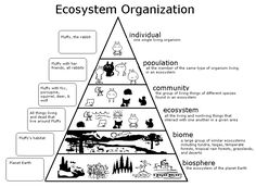 Levels of Organization in an Ecosystem    Click for More Info ...