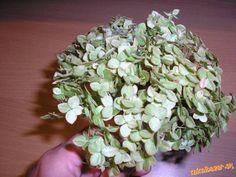 Sušenie hortenzie v mikrovlnej rúre How To Dry Basil, Diy And Crafts, Herbs, Plants, Gardening, Hydrangeas, Creative, Lawn And Garden, Herb