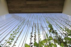 O House / Wangstudio #groenscherm #tuin #structuur #groenegevel #scherm #screen #zonwering #groen #gevel