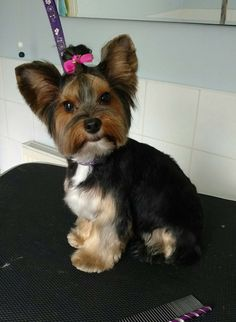 Dog Grooming Salons, Pet Grooming, Yorkie Hairstyles, Yorkshire, Puppy Love, Fur Babies, Dogs And Puppies, Your Dog, Fancy