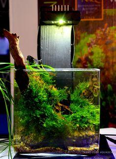 ... Cube Aquascape Ideas on Pinterest Aquascaping, Cubes and Aquarium