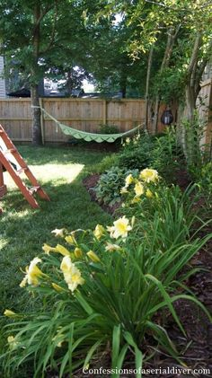 Back yard border garden
