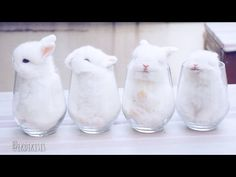 Baby Bunnies In Cups - YouTube