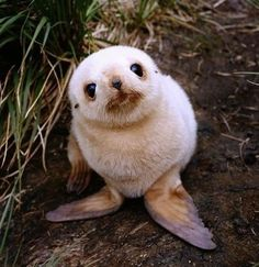 guaranteed to make your day better!  QUESTION 1: Do you think that baby seals look quizzical?