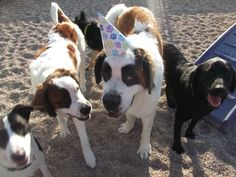 We love to celebrate birthdays at Camp!