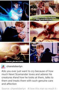 I love Newt so much ❤️ Eddie Redmayne was beyond fantastic Harry Potter Universal, Harry Potter Fandom, Harry Potter Memes, Harry Potter World, Hogwarts, Slytherin, Gellert Grindelwald, Fangirl, Yer A Wizard Harry