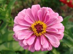 Free Image on Pixabay - Flower, Purple, Garden, Bloom Free Pictures, Free Images, Purple Garden, Bloom, Flowers, Plants, Plant, Royal Icing Flowers, Flower