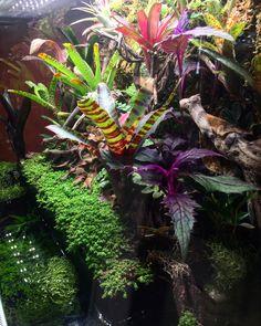 Paludarium, Vivarium, Frog Tank, Garden Of Eden, Terrarium, Tanks, Terrariums, Plant Nursery