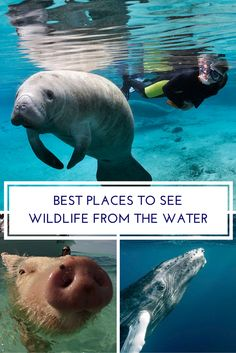 Sometimes the best way to see wildlife is from the water.