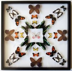 Real Butterfly art