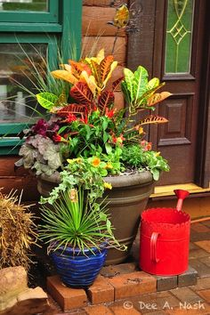 1000 images about crotons on pinterest tropical plants tropical gardens and container garden - Tropical container garden ...