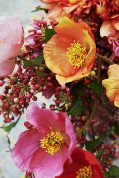Love Nature: Poppy