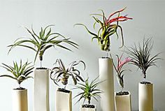 DIY Gardening: Caring for Air Plants