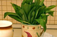 Medvehagymás fűszervaj recept - Borsa.hu Planter Pots