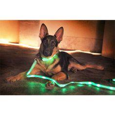 LED collar w/matching leash