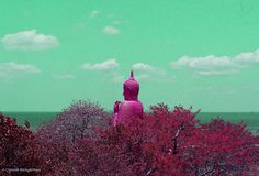 Tropical life . . . . . . Copyright (c) by Chamodi waidyathilaka.All rights reserved  #Dailyinspirations #blog  #tropicallife #Greendaysathome  #livefolk #islandlife #lifestylebloggers  #vsco #colorphotography #photography #designerlife #creativeir #artistry_vision #infraredworld #ig_photooftheday #contrast #highcontrast #ig_infrared