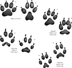 How to save animal tracks and How to get your kids involved with learning about wildlife :)