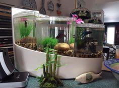 Beta Falls Aquarium
