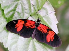 Heliconius Butterfly House, Moth, Bugs, Insects, Bicycle Crunches, Beetles
