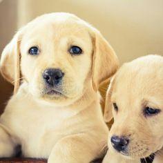 Cute puppies friends