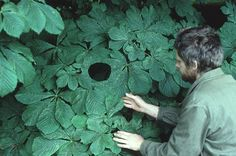 SPOTLIGHT: Nature Sculptures by Andy Goldsworthy Andy Goldsworthy is a brilliant British artist who collaborates with nature to make his creations. [[MORE]] or his ephermal works, Goldsworthy often...