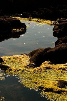 @ the Oregon Coast near Florence
