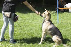Charla educativa para la prevención de ENVENENAMIENTO CANINO