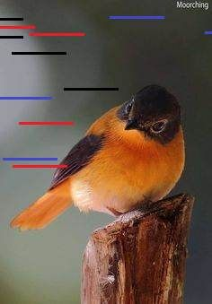 55 Unique Images Of Birds That You Will Autumn Winter Women Scarf Cap Gloves Suit with Warm Plush, Comfort Soft Knitting Wool Knitted Snood Face Neck Hand Warmer Cravat Beanies Most Beautiful Birds, Pretty Birds, Exotic Birds, Colorful Birds, Develop Pictures, Bird Gif, Thing 1, Diy Crafts Hacks, World Pictures