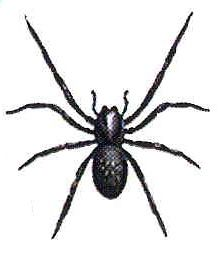 black and white images of spiders - Google Search