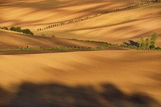 Autumn light and shadow in countryside by Pavel Rezac Autumn Lights, Light And Shadow, Tuscany, Countryside, Wall Art, Tuscany Italy, Wall Decor