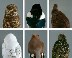 """"""" bird's Backs"""""""