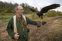 Bald Eagle, Bird, Animals, Italia, Animales, Animaux, Birds, Animal, Animais