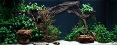 Layout 27 - Tropica - Tropica Aquarium Plants