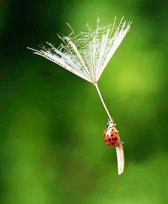 | La vertigine non è | paura di cadere, | ma voglia di volare | (Lorenzo #Jovanotti) #Airam: fatti della materia dei #sogni.