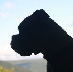 Silhouette of a boxer Boxer Mom, Boxer And Baby, Baby Dogs, Pet Dogs, Dog Cat, Boxer Puppies, Dogs And Puppies, Doggies, Boxer Rescue