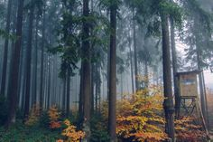 Wald im Herbstnebel (Fotoserie)
