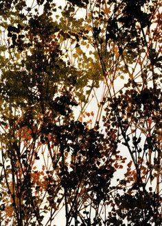 Autumn_Burnt Sienna - Art Print by Garima Dhawan