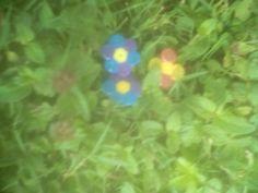 Trois fleurs d'une simplicité enfantine #simple