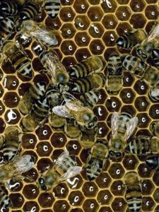 How to Raise Bees With a Top Bar Beehive | eHow.com