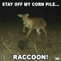My hubby need deer like this at all his feeders!