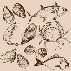 Вектор: Hand drawn seafood, vector illustration