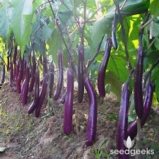 Long Purple Eggplant Heirloom Seeds - Non-GMO - Untreated - Open Pollinated!