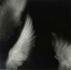 by Yuki Onodera - angel wings Angels Among Us, Angels And Demons, Dark Angels, Ange Demon, Mystique, Jolie Photo, Illustrations, Angel Wings, Bird Wings