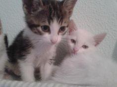 Mascota en adopción en Adoptaloo.com - gatitos en adopcion