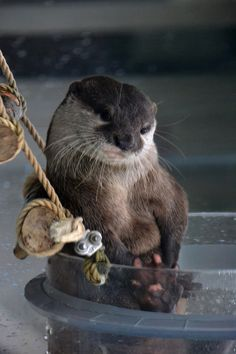Otter is a born model - May 19, 2012