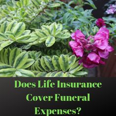 Does Life Insurance Cover Funeral Expenses?  #LifeInsurance #FinalExpense #FinalExpenseInsurance #FuneralCover #FuneralExpenses