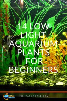 14 Low Light Aquarium Plants For Beginners. The easiest plants to grow your Aquarium with no additional work. For beginners and busy people. Planted Aquarium, Aquarium Fish Food, Freshwater Aquarium Plants, Betta Aquarium, Tropical Freshwater Fish, Tropical Fish Aquarium, Planted Betta Tank, Aquarium Garden, Tropical Fish Tanks