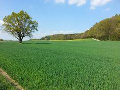 Zürcher Unterland