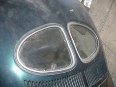52 split window beetle